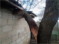 Sioux Falls Tree Care